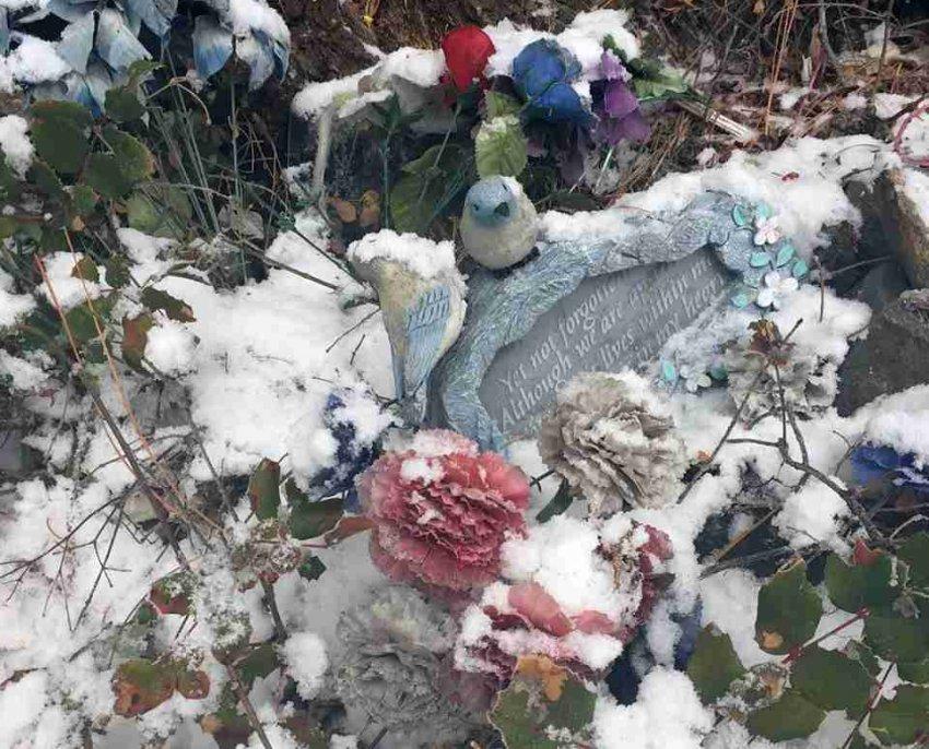 Необъяснимое исчезновение 8-летнего Деррика Энгебретсона - Паранормальные новости