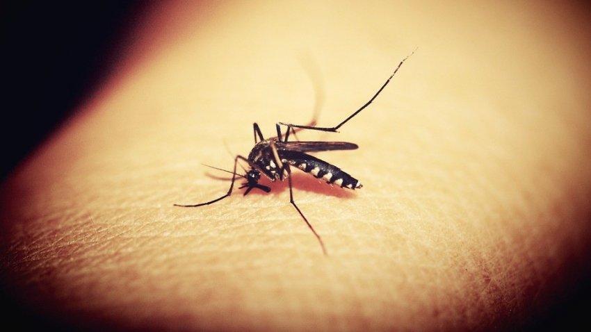 Заразные комары ставят под угрозу жизни людей в США