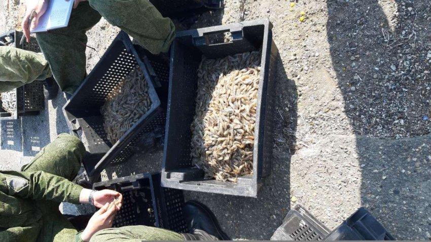 Краснодарский краевой суд оставил без изменений приговор Темрюкского районного суда по делу о браконьерстве