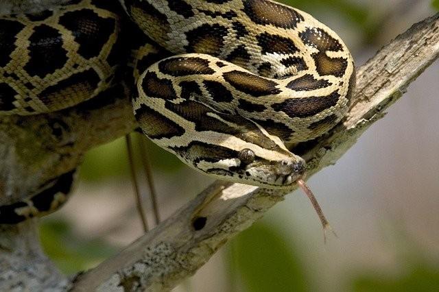 Шотландец увидел огромного угря или змею, живущую в маленьком пруду - Паранормальные новости