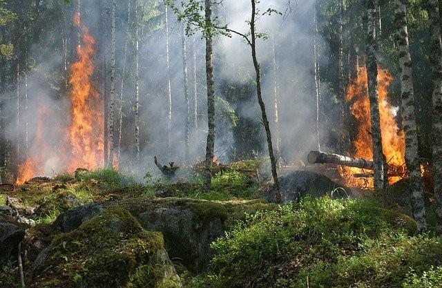 Пожарный, тушивший лес, столкнулся с агрессивным йети - Паранормальные новости