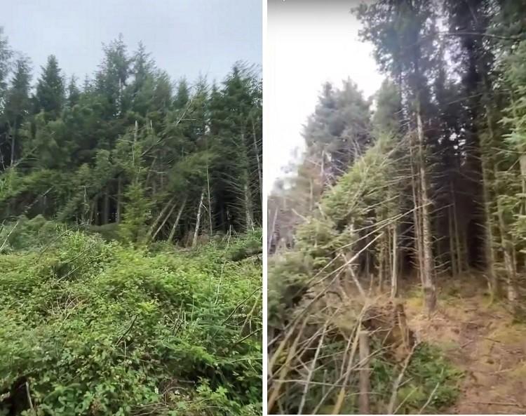Мужчина обнаружил место посадки НЛО в лесу и услышал странные крики - Паранормальные новости