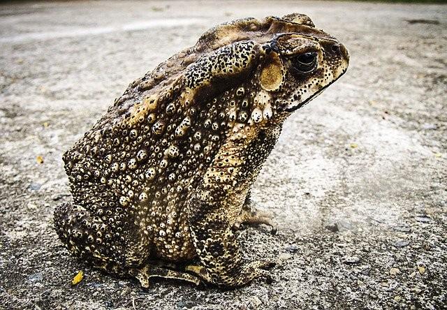 10 странных фобий, связанных с животными - Паранормальные новости