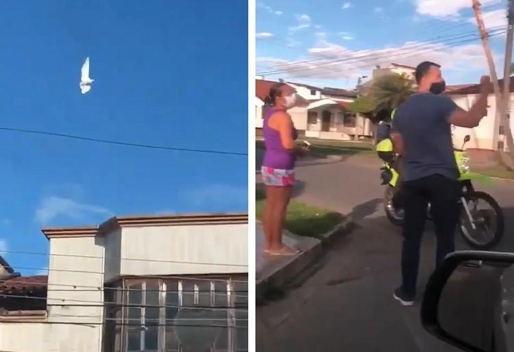 Снова глюк в Матрице? В Колумбии засняли голубя, застывшего в полете - Паранормальные новости