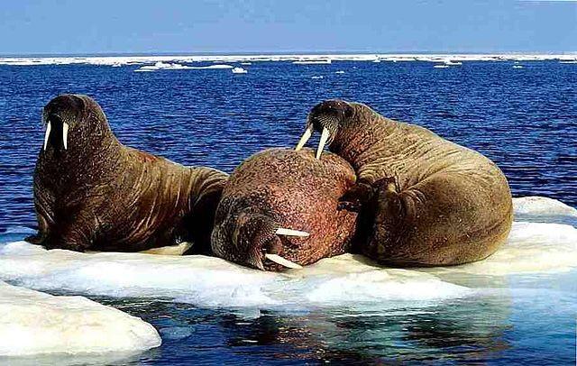 Загадочный шум Нунавут, из-за которого в этом регионе пропали киты и тюлени - Паранормальные новости