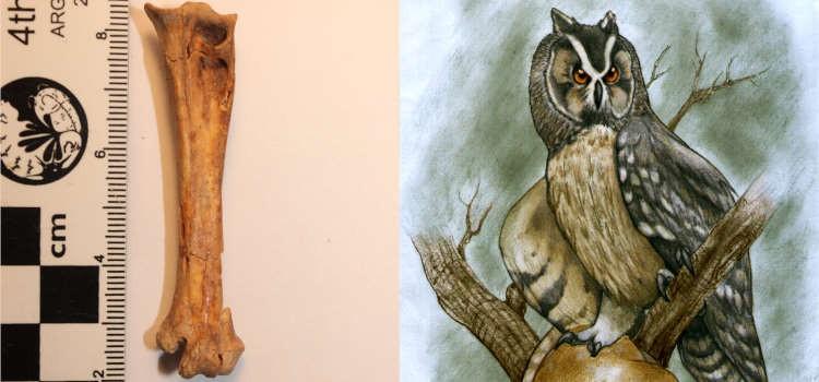 В Эквадоре нашли останки гигантских доисторических сов - Паранормальные новости