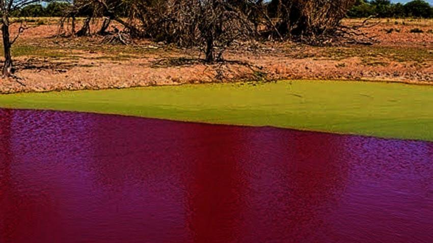 В Парагвае озеро неожиданно стало кроваво-красным