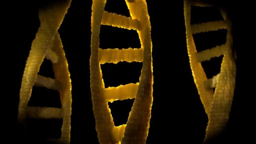 Ученые выяснили, что будет с мужчинами если у людей исчезнет Y-хромосома