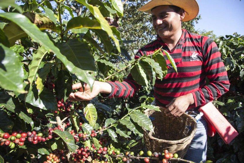 Рассказ о двух фермерах из Гондураса, как они выращивают кофе и переживают эпоху пандемии