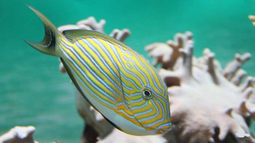 Коралловые рифы: изменение климата и пестициды могут привести к гибели популяции рыб