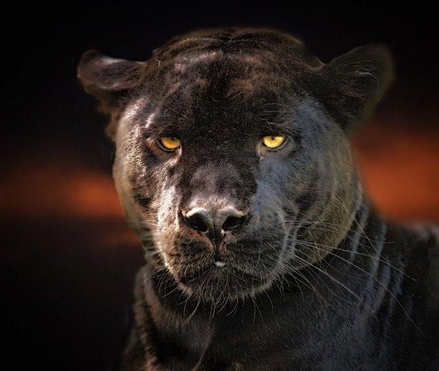 В Лондоне женщина увидела странную черную кошку и потом к ней пришла Женщина в черном