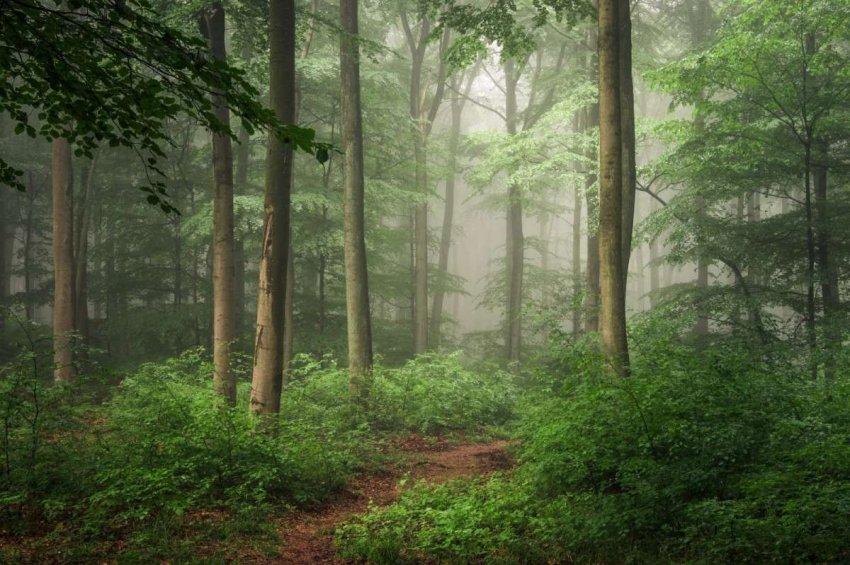 Молодые деревья или старые леса. Что более важно для замедления изменения климата