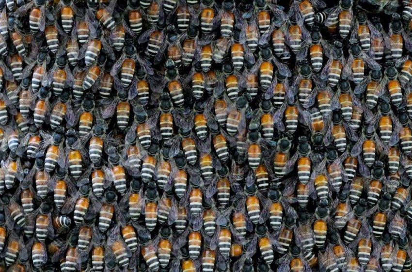 От загрязнения воздуха пчелы могут заболеть – новое исследование