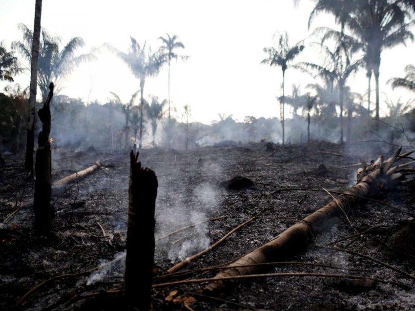 Пожары в Амазонии загоняют фермеров в ловушку нищеты и приводят к новым пожарам