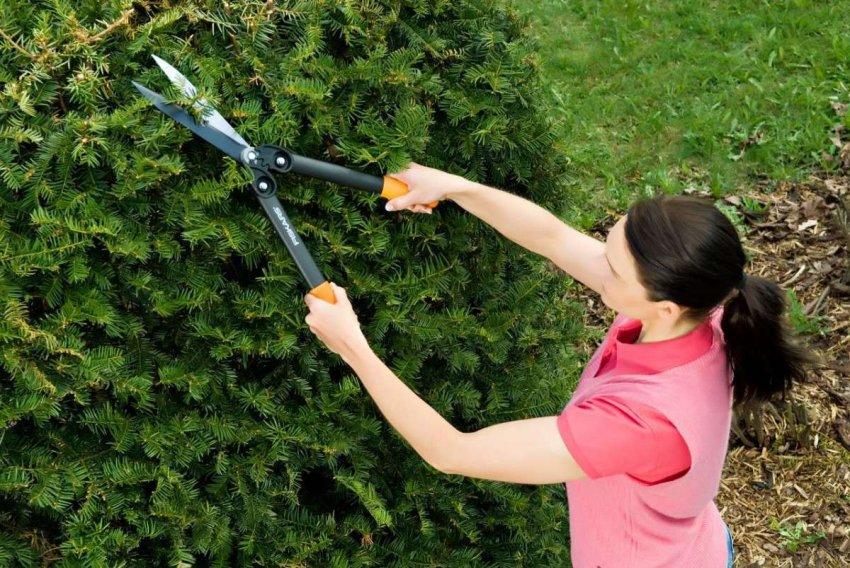 Обзор на лучшие садовые ножницы