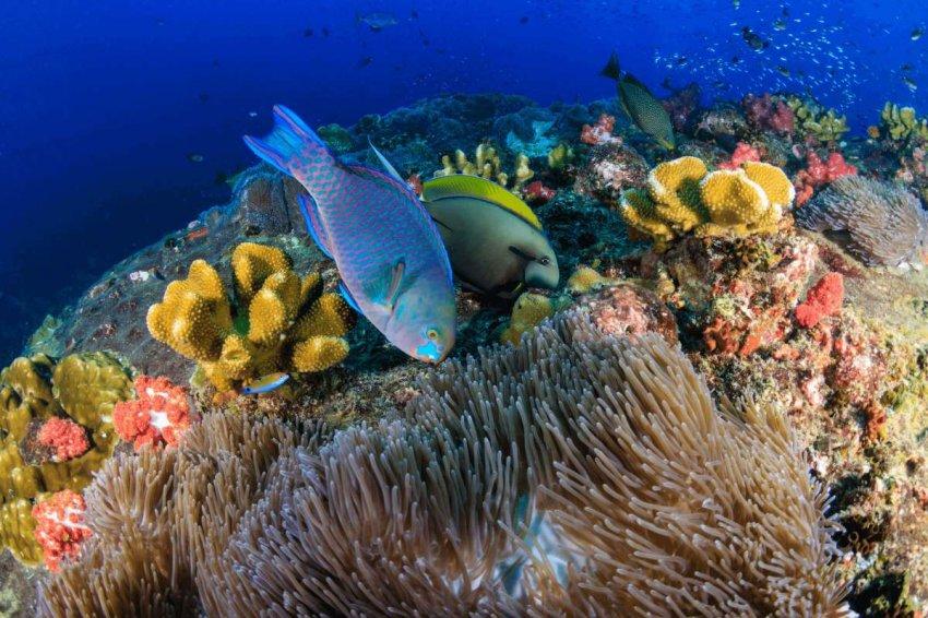 Разлив нефти на Маврикии: как могут пострадать коралловые рифы, мангровые заросли и водоросли