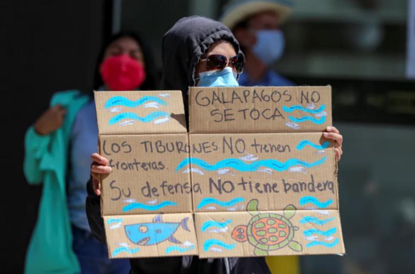 Галапагосские острова: как защитить удивительную морскую жизнь островов от огромного китайского рыболовного флота