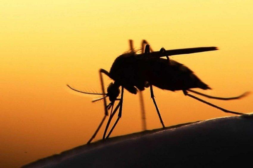 Малярия: новая карта показывает, какие районы будут подвержены риску из-за глобального потепления