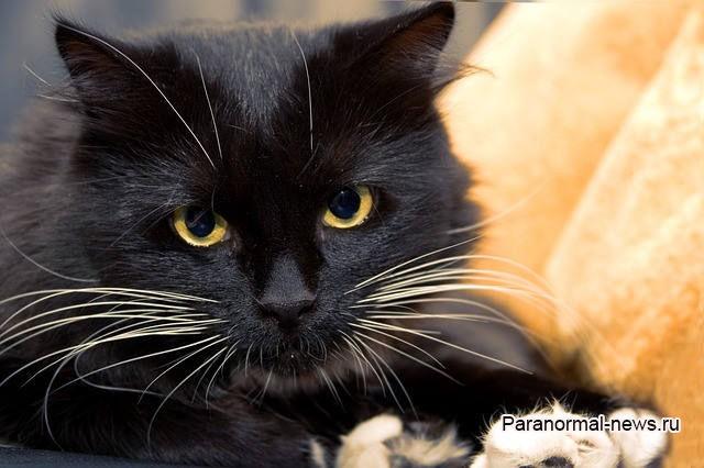 Черная кошка навещала меня в больнице, но ее ни кто не видел