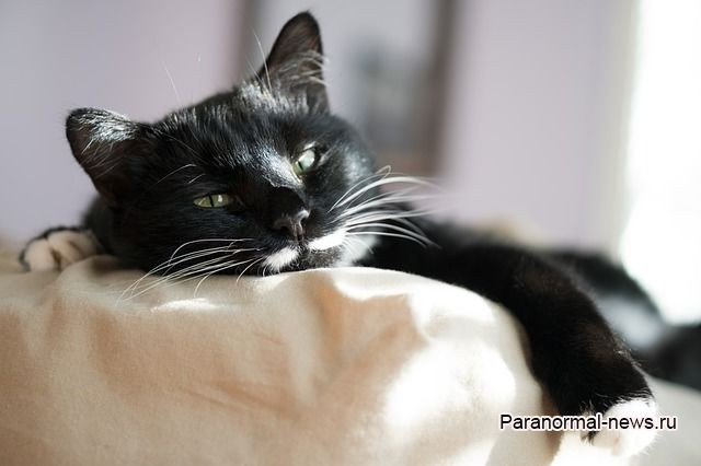 Черная кошка навещала меня в больнице, но ее никто не видел