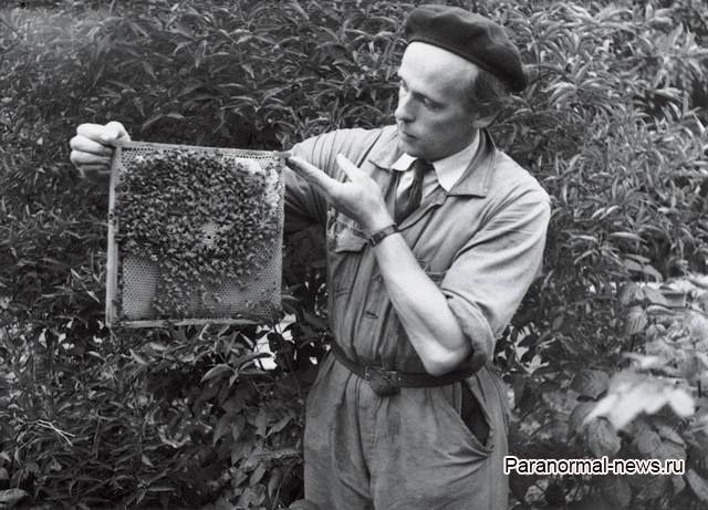 Как шведский пчеловод пришельцев встретил и разбогател