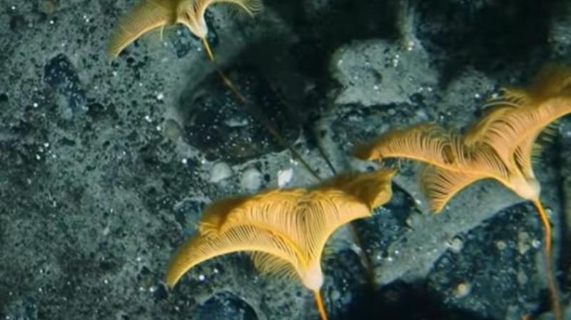 Подо льдами Антарктиды обнаружили неизвестных науке существ