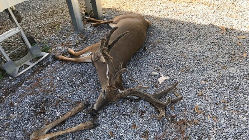 В Луизиане гигантские стаи комаров массово убивают домашних и диких животных