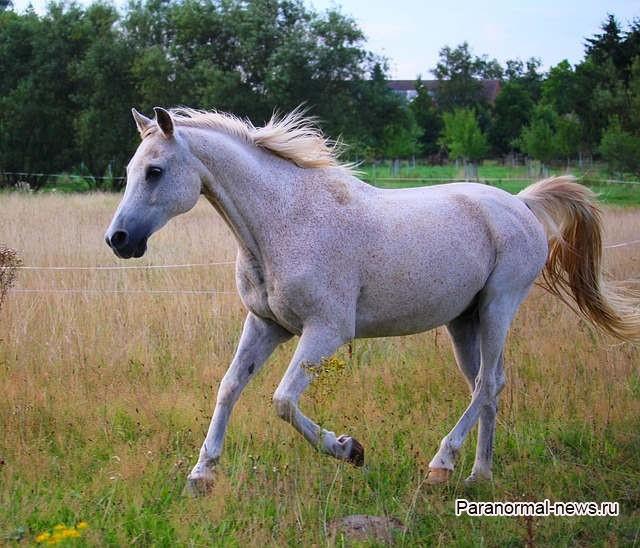 Загадочные увечья лошадей теперь происходят и в Швеции