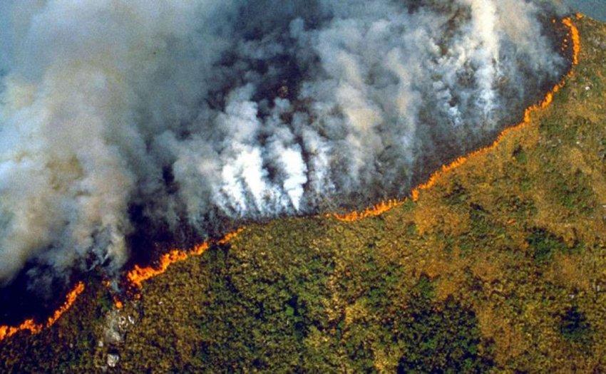 Борьба с огнем с помощью торговли или как Европа может помочь спасти Амазонку
