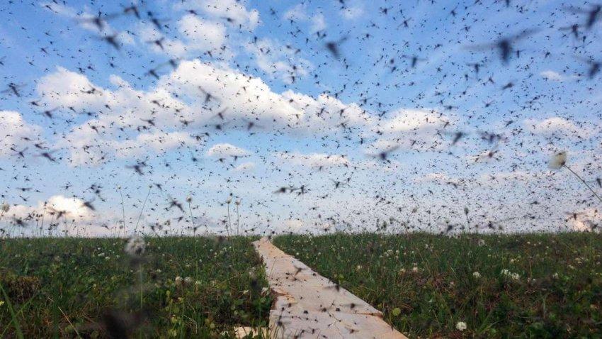 С глобальным потеплением комары переносят другие болезни