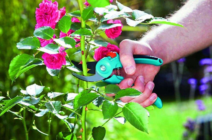 ТОП 10 секаторов для роз