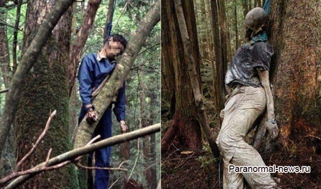 10 тревожных фактов о японском Лесе Самоубийц
