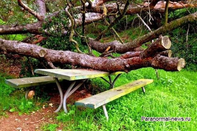Дерево задавило насмерть двух человек в парке и теперь тут живут их злые призраки