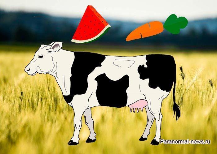 В США ученые создают «витаминных» коров, внедряя в их ДНК клетки моркови и арбуза