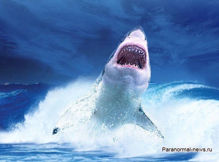 В Австралии акулы поставили годовой рекорд по убийству людей