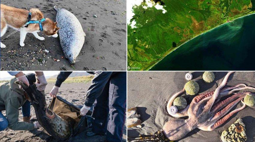 Российские активисты предупреждают об экологической катастрофе с морской фауной Камчатки