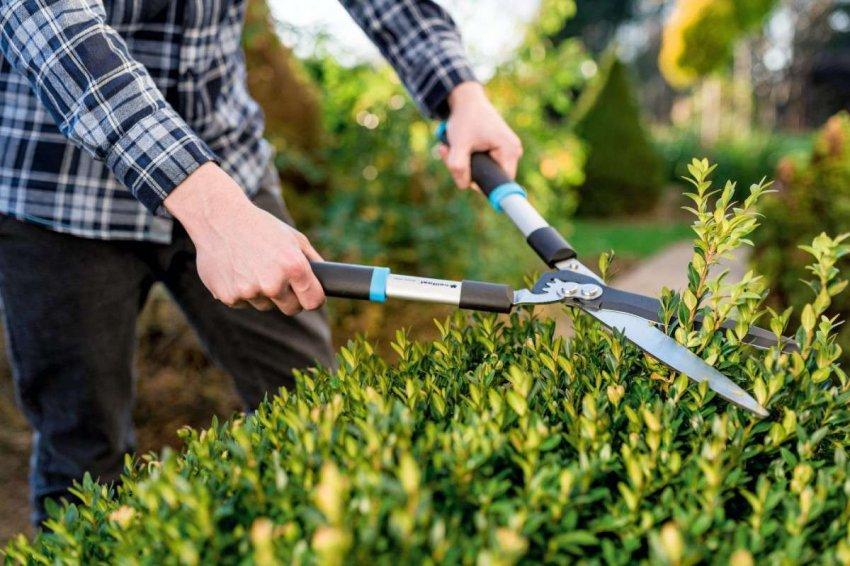 Обзор ножниц для травы
