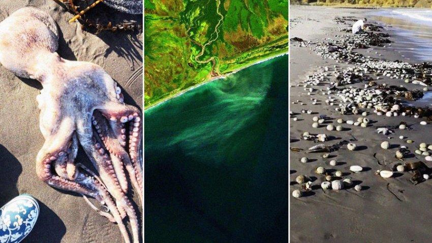 На Камчатке уже в другом месте начали массово гибнуть морские животные