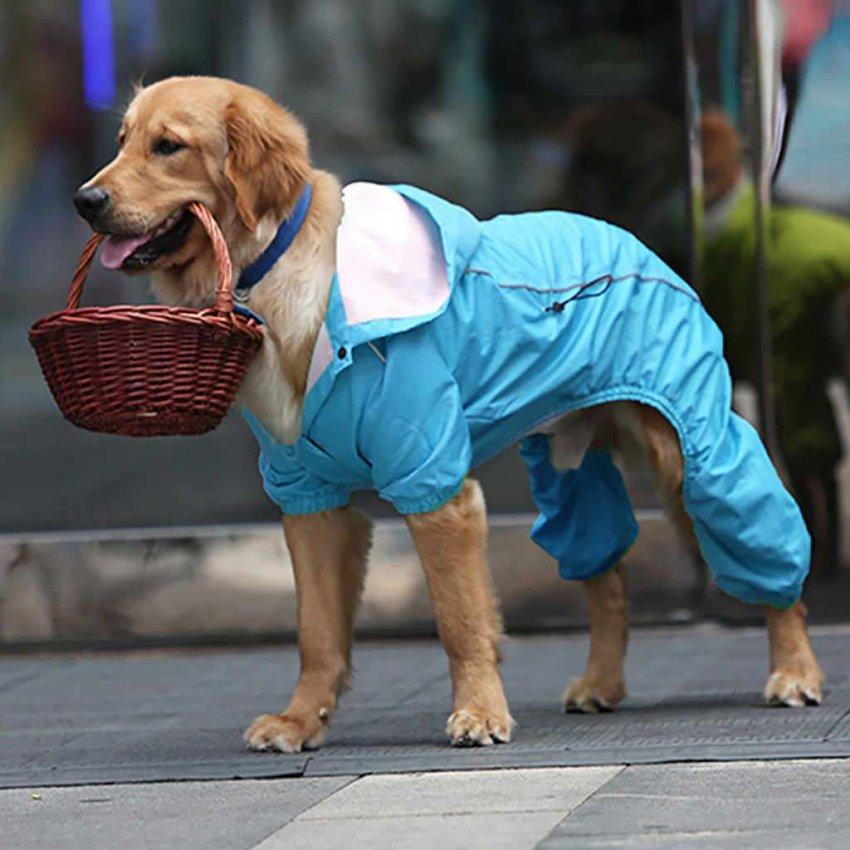 ТОП 10 дождевиков для собаки