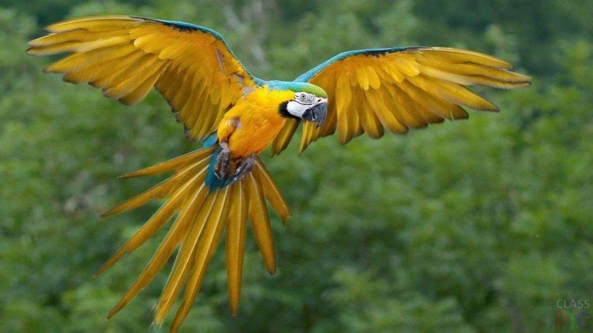 Любопытные дети: Как у некоторых животных появились крылья, чтобы летать?