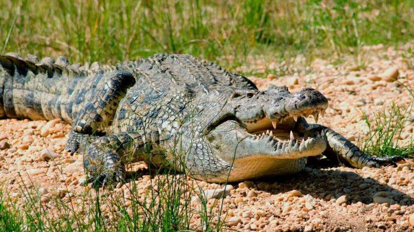 Список, который вас удивит: пять самых опасных животных Африки