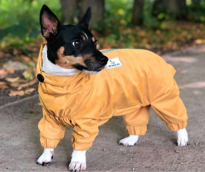 ТОП 10 демисезонных костюмов для собак