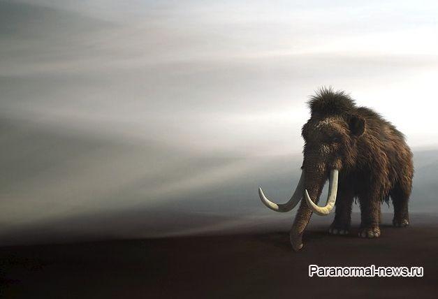 Встречи с живыми мамонтами в России и других странах