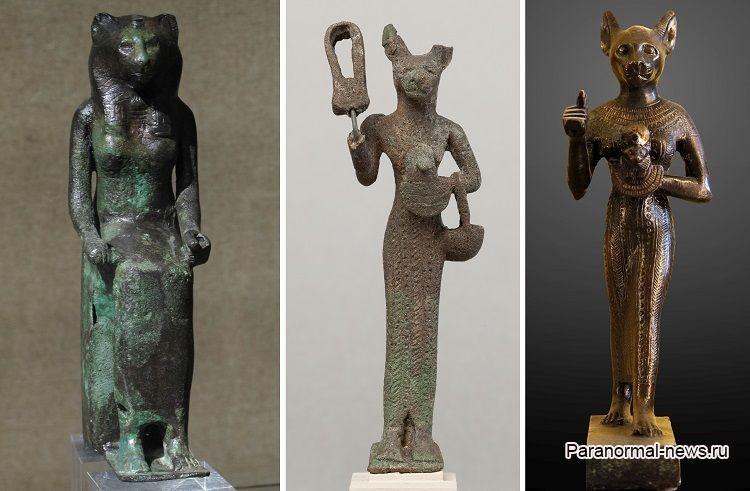 Кошки возненавидели мужчину из-за проклятия египетской богини