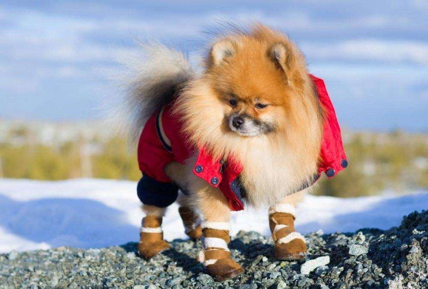 ТОП 10 лучших вариантов ботинок для собак
