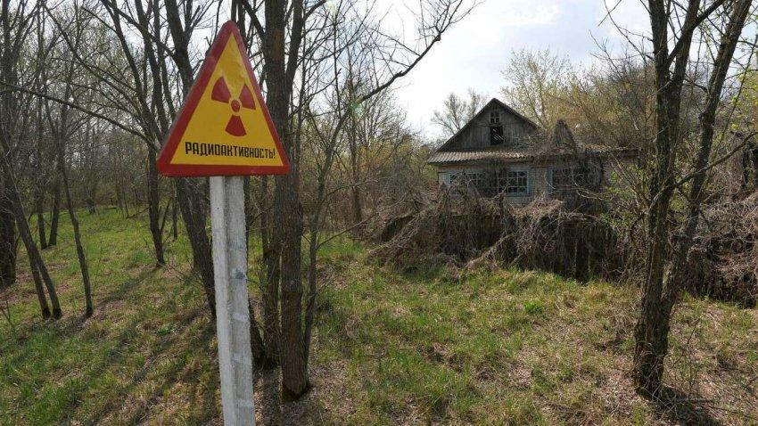 Чернобыль: шмели все еще подвергаются риску радиации почти 35 лет спустя