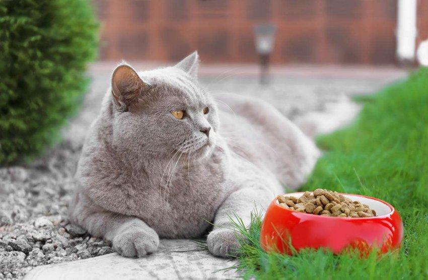 Рейтинг премиум кормов для кошек