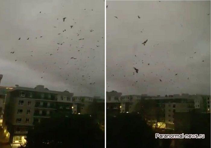 Стая ворон более 14 часов с криками кружила над улицей как в фильмах об Апокалипсисе (Видео) - Паранормальные новости
