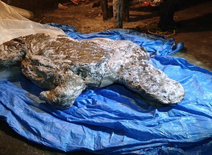 Уникальная находка в Якутии - шерстистый носорог с сохранившимися внутренностями - Паранормальные новости