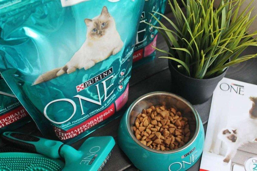 Обзор лучших кормов высокого качества для кошек конца 2020 года